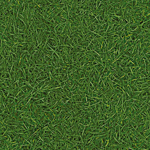 VISION GRASS T25